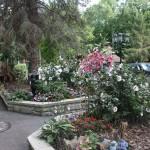 Blackthornes garden
